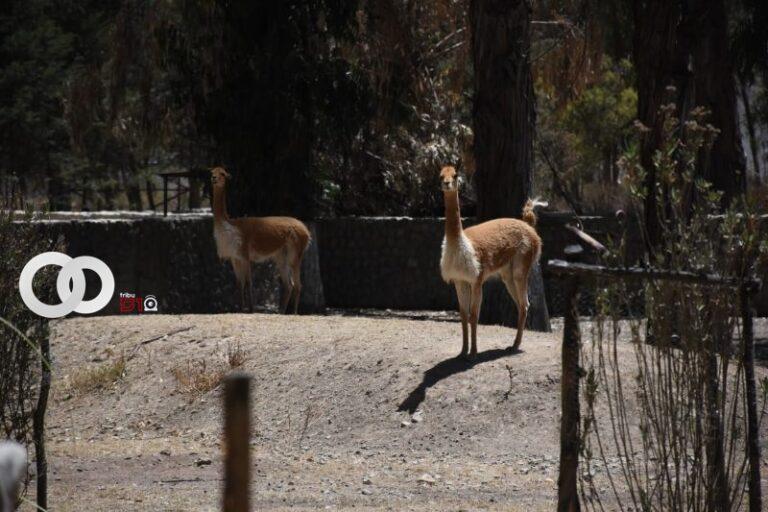 Bioparque Vesty Pakos alberga a más de 500 animales