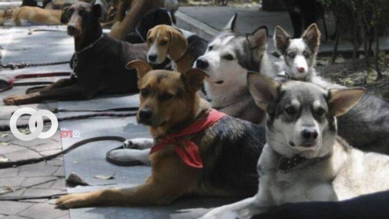 Caninos detectan malas intencionesen una persona
