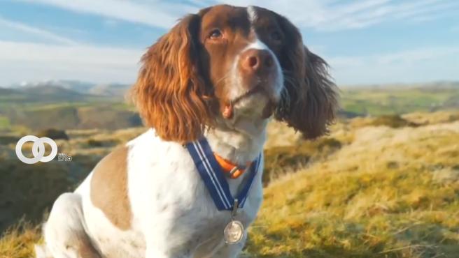 Primera mascota doméstica en recibir la Orden de Mérito PDSA en Reino Unido