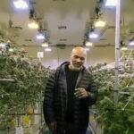 Mike Tyson reveló sus grandes ganancias vendiendo marihuana