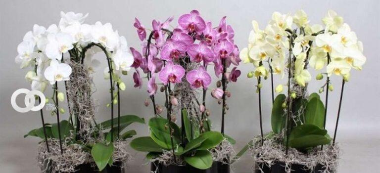 Santa Cruz será sede de una exposición internacional de orquídeas