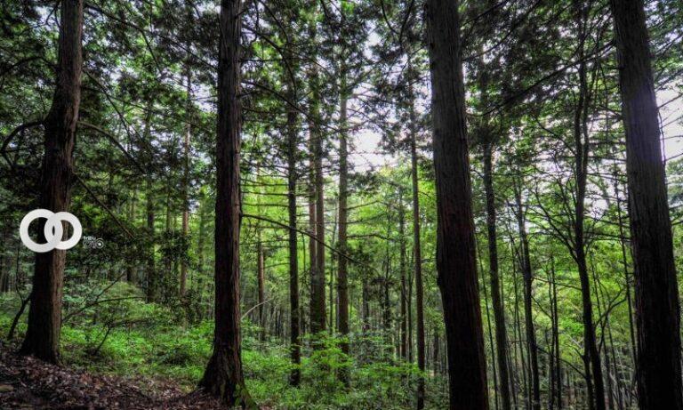 Apple invertirá en proyectos forestales contra el cambio climático