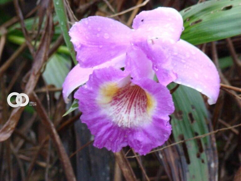 Orquídeas: el atractivo turístico en el Parque Nacional Cotapata