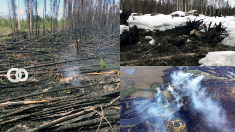 Debido al cambio climático los incendios 'Zombies' resisten el invierno