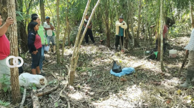 Indígenas del Beni se capacitan en peritaje de agroforestería sucesional