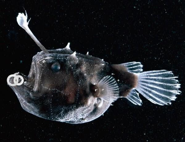 Un extraño pez visto en California