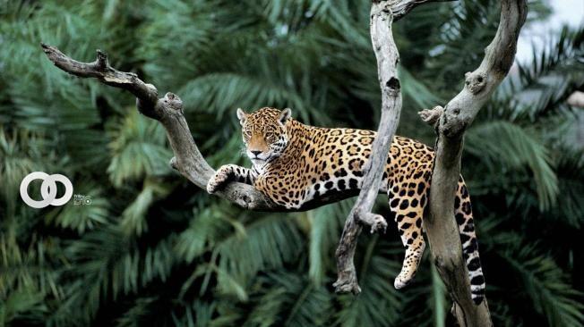 Más de 600 especies están en peligro crítico de extinción en Sudamérica