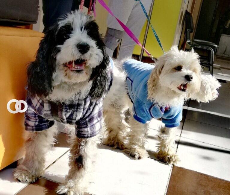 GAMO inició la campaña de esterilización canina y felina