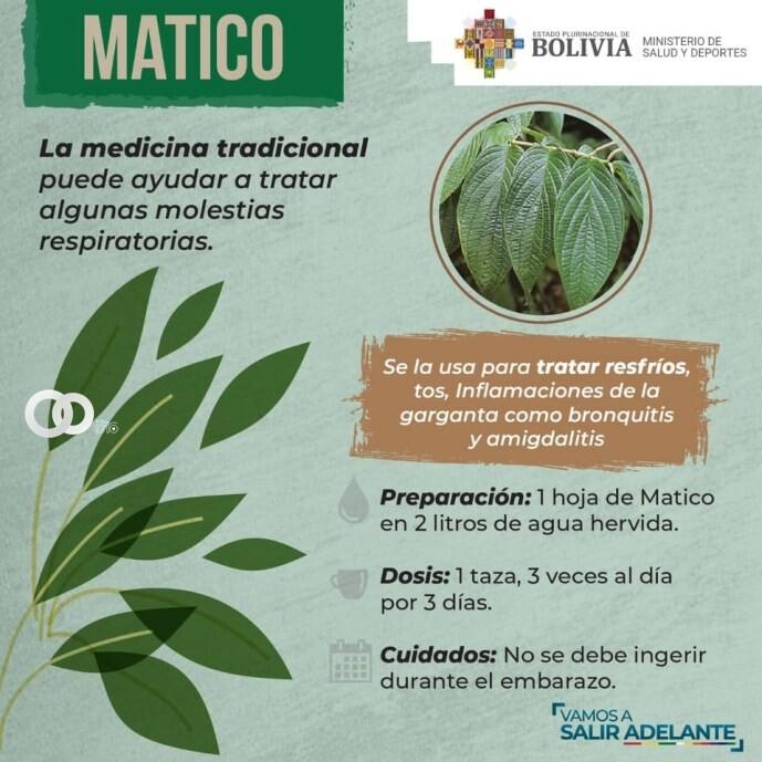 Salud creó una aplicación digital donde se podrá conocer como utilizar las plantas medicinales