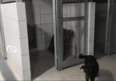 Albergue Municipal cruceño se quedó sin perros y gatos tras realizar feria de adopciones