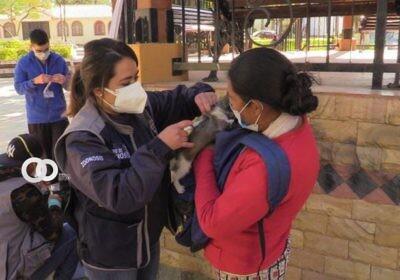 Más de 500 mascotas fueron vacunadas contra la rabia en Quillacollo