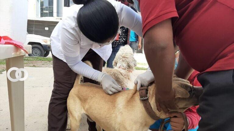 Ministerio de salud vacunó 138.758 mascotas en Cochabamba