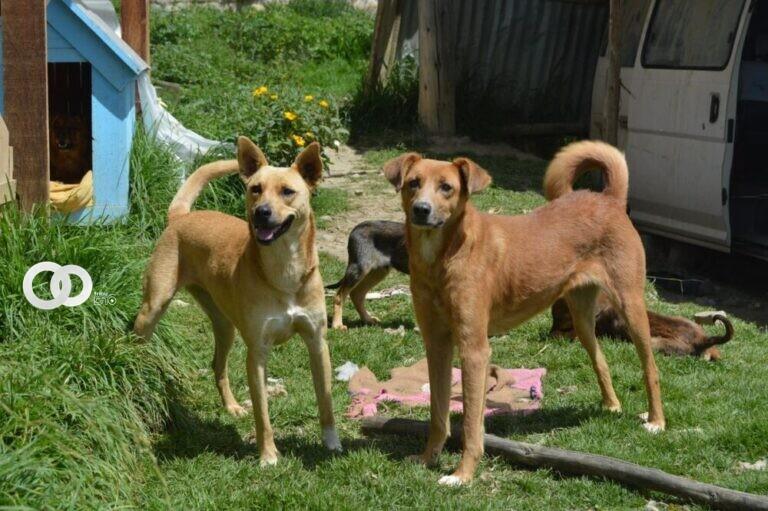 Albergue de animales abre feria de adopción en Santa Cruz
