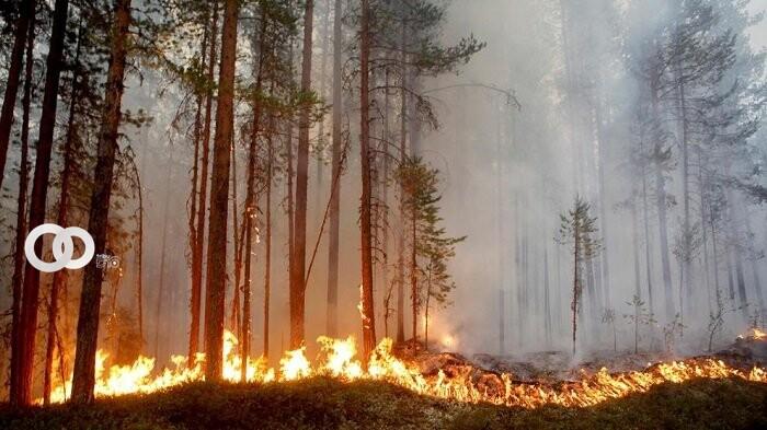 Incendios Forestales afectan a los pueblos indígenas