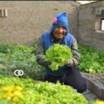La Paz: macrodistrito de Hampaturi podría convertirse en bastión de producción agrícola