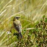 La Paz se alista para el avistamiento de aves en Ausquisamaña, Pura Pura y Muela del Diablo