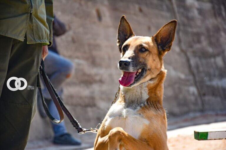 La Paz: comenzó la campaña de vacunación y desparasitación para perros y gatos