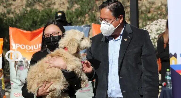 Este lunes los perrosfueron homenajeados por la festividad de San Roque, santo de las mascotas