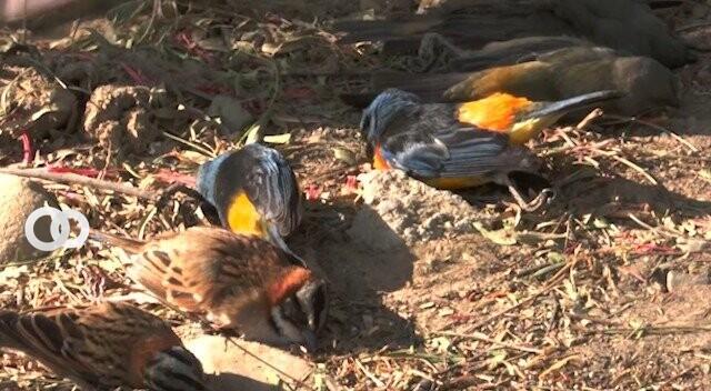 Cochabamba: Senasag halló un agroquímico de uso ilegal en plantación de lechugas