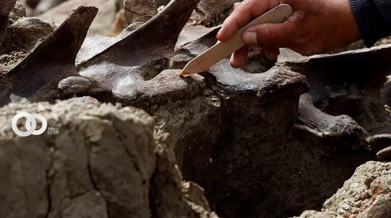 Hallan costillas de mamut de hace un millón de años en España