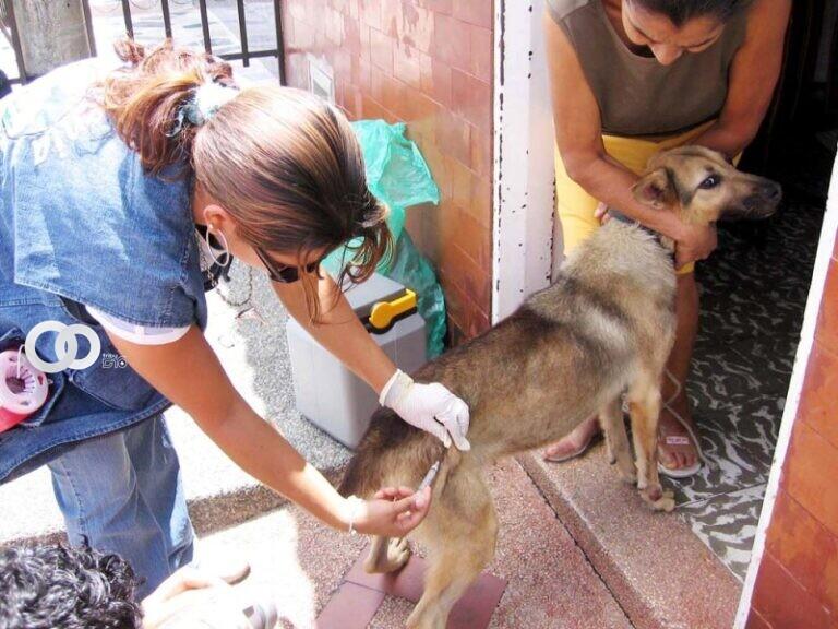 Cochabamba: domingo 19 de septiembre se vacunará a más de 700 mil mascotas contra la rabia