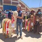 Feria Nacional de Camélidos fortalece la economía del sector