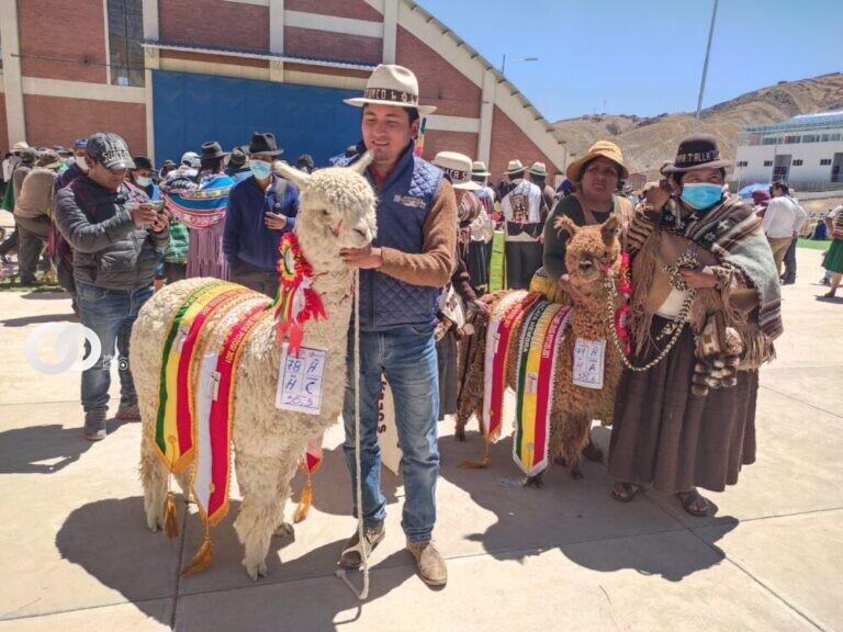 Feria de camélidos