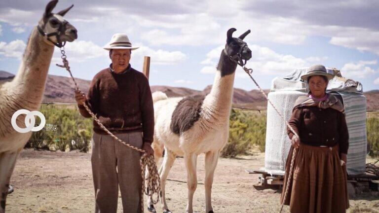 Programa «EMPODERAR» del MDRyT apoya la producción de camélido en Oruro