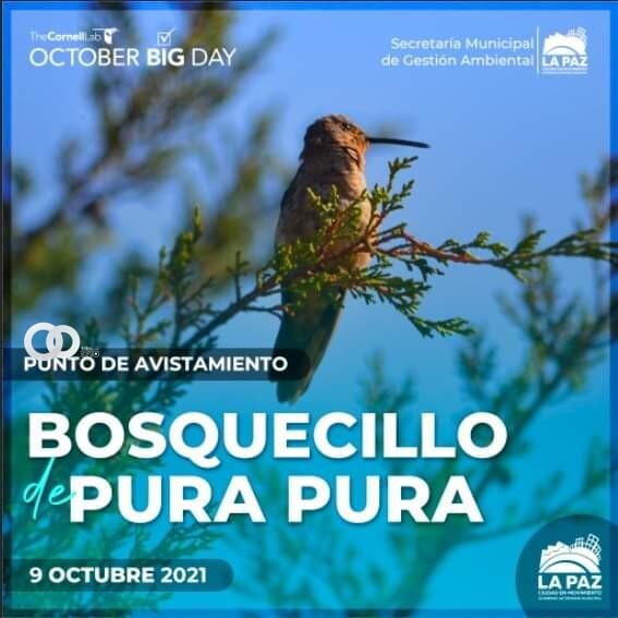 Se realizará la Jornada de Aviturismo en 4 áreas protegidas del municipio paceño