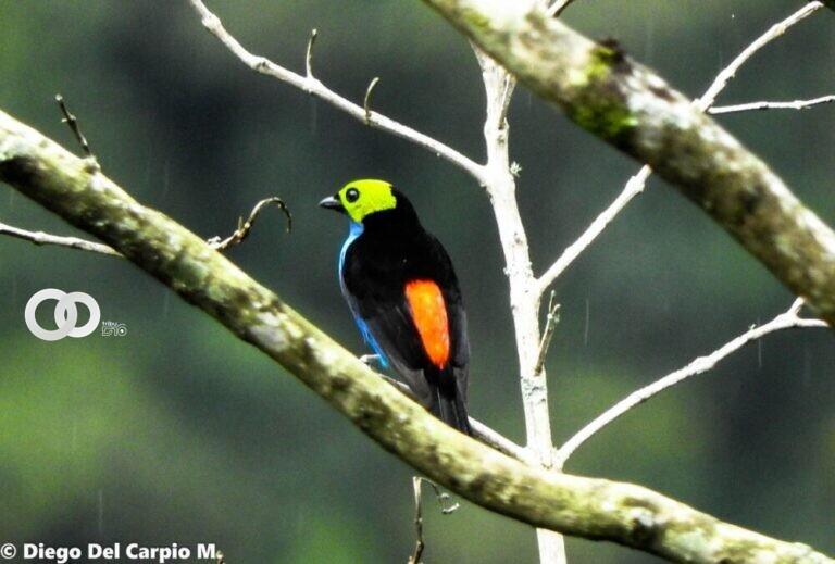 Bolivia está entre los 5 países con mayor cantidad de especies de aves